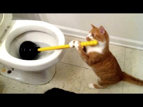 Funny TOILET CATS are the ULTIMATE TRY NOT TO LAUGH challenge - Funniest CAT compilation