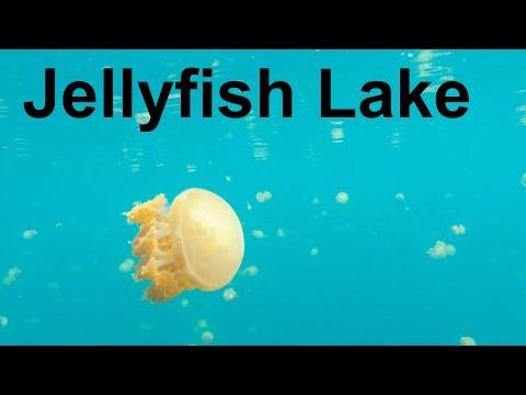Jellyfish Lake, West Papua