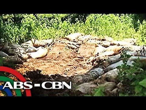 Libu-libong patay na manok, itinapon sa Pangasinan