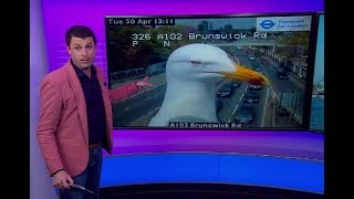 بي_بي_سي_ترندينغ:  طيور النورس تغطي كاميرا حركة المرور في لندن