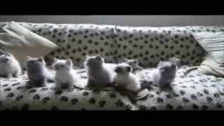 Смешное видео про животных (танцы)