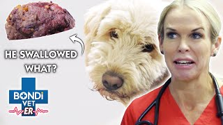 DEADLY Toxic Glue RAPIDLY EXPANDING In Dog's Stomach  | New Episode | Bondi Vet E.R.