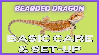 UGR -- Bearded Dragon Care Video