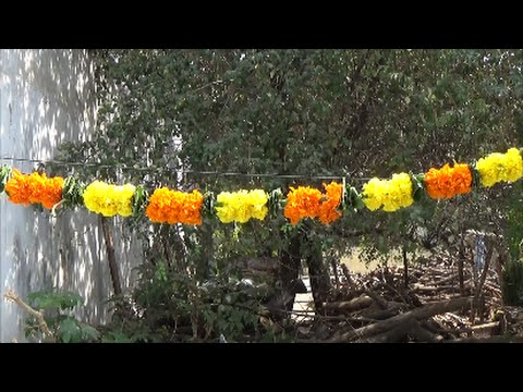 how to make marigold flower garland at home ideas ( for