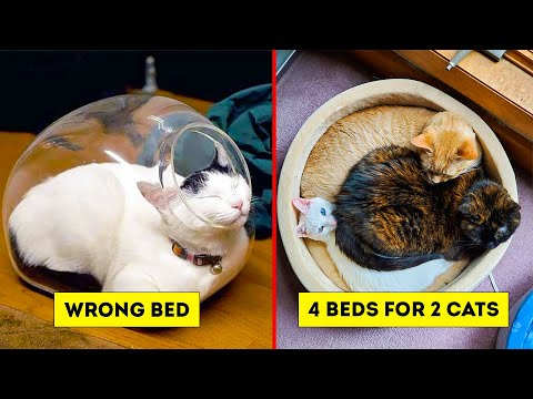 Funny Cat Logic Beds