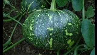 गर्मी की संब्जियाँ ||  Summer Vegetable.vegetable gardening