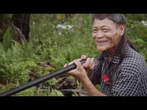 Traditional Malaysian blowpipe maker shows how he takes down his prey in the wild