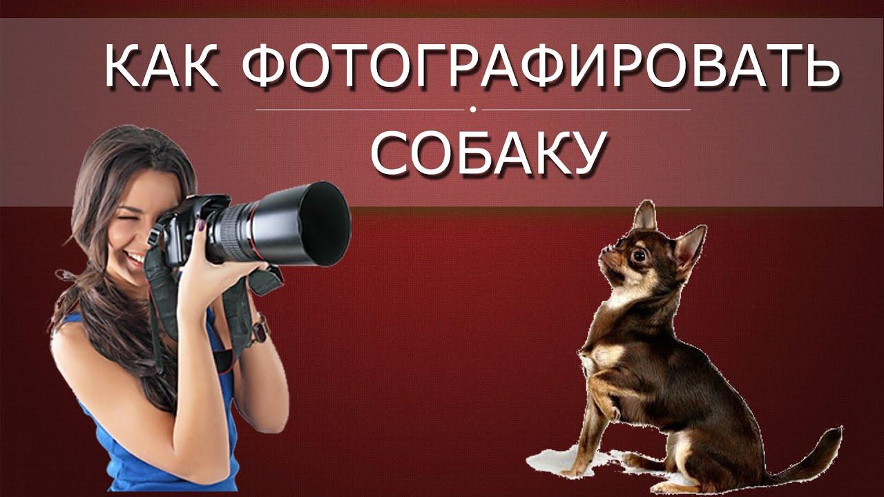снова рубрике правила фотосъемки щенков статей материалов остромировом