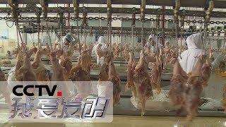 《我爱发明》 美味行动 7:骨肉分离机 解决剔肉难题 20190214   CCTV科教