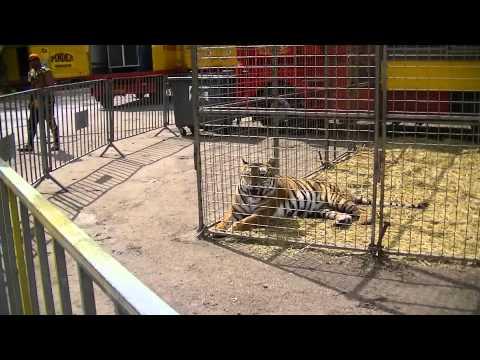 Zoo Du Cirque Pinder Mardi 25 Juin 2013 à Epinal..