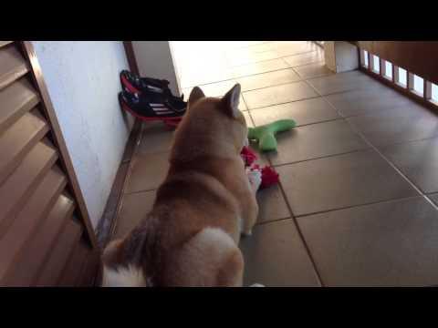 Trailer do filme O Cão Japonês