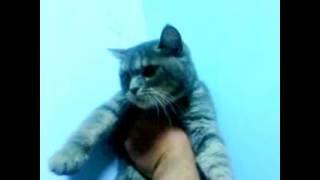 Кот в больнице