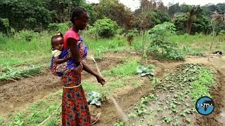 بذور الأمل في الكونغو