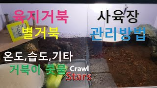 [별거북]시즌1 베이비 #.14 육지거북 사육장 관리방…