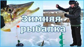 ЗИМНЯЯ РЫБАЛКА на жерлицы - ловля щуки на живца зимой 2016(Зимняя рыбалка на жерлицы - ловля щуки на живца зимой. Покажу как мы ловим. Зимняя рыбная ловля со льда в..., 2016-02-23T14:45:39.000Z)