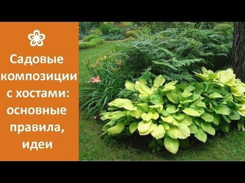 ❀ Садовые композиции с хостами: основные правила, идеи