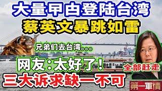 一场好戏上演!大量曱甴登陆台湾!蔡英文当局暴跳如雷!网友:太好了!三大诉求,缺一不可!