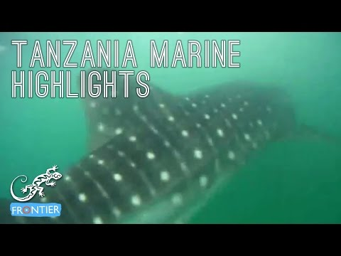 Tanzania Marine Highlights