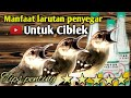 Larutan Untuk Ciblek  Mp3 - Mp4 Download