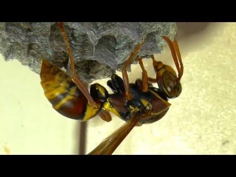 10 САМЫХ УМНЫХ насекомых В МИРЕ
