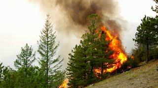 Особый противопожарный режим введен в полусотне российских регионов.