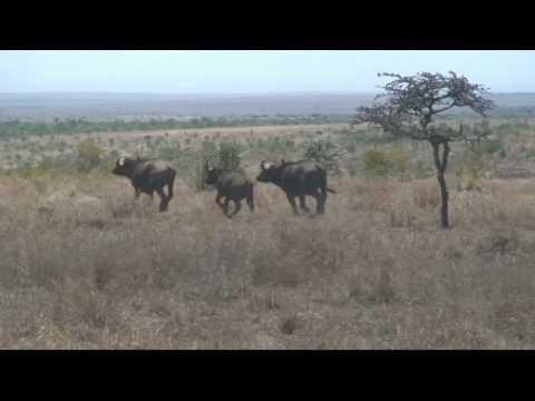 Afrika, Kenia Video mit Musik von klaus badelt - the time machine (travelling to paradise)