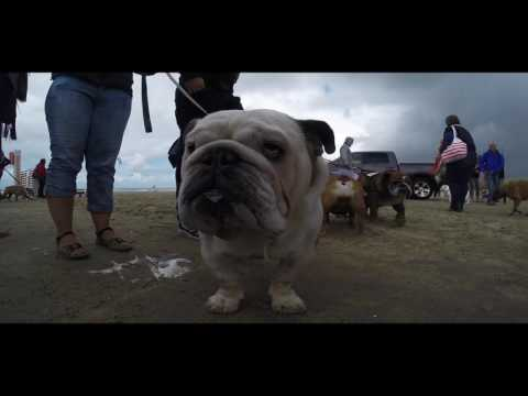Baggy Bulldog BeachWalk               (Watch in HD)