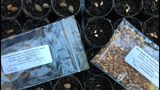 reforesting-the-ranch-part-6-seed-stratification