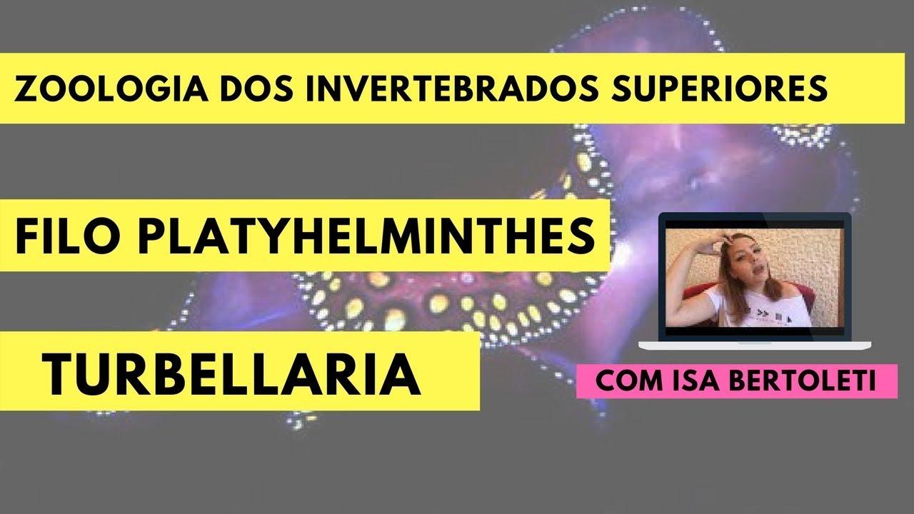 filo platyhelminthes turbellaria