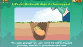 Plant Life Cycle - Science Lesson for 2nd Graders