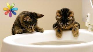 Как приучить кота к унитазу? – Все буде добре. Выпуск 690 от 20.10.15