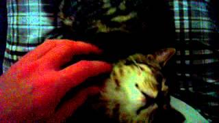 Кошки. Ласка. Cамые милые животные.