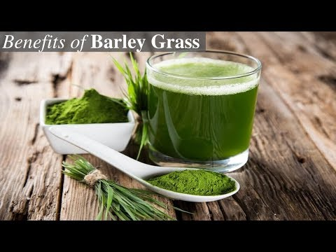 9 Amazing Health Benefits of Barley Grass