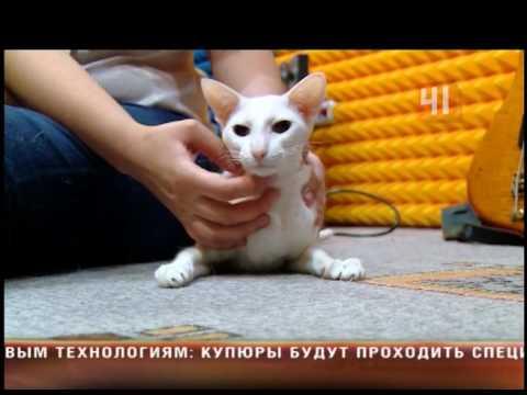 Игры с кошками. Игра с кошками онлайн. Играть с кошками