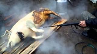как почистить свинью в 21 веке