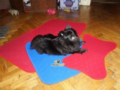 Многоразовые пеленки для собак: использование и уход. - YouTube
