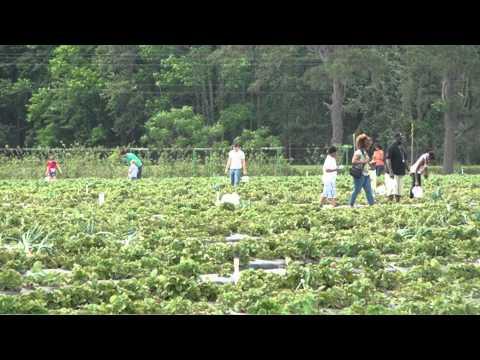 Ottawa Farms (Pete Waller)