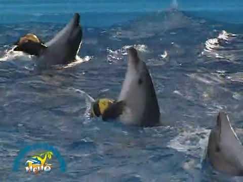 Одесский дельфинарий НЕМО Дневное шоу 2007г By Romario Roman