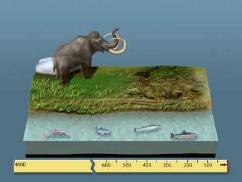 L'échelle des temps géologiques