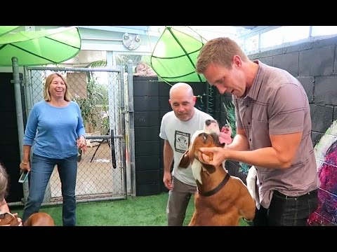 BOXER TRIES NEW BACKYARD FOR THE FIRST TIME - AMAZING!