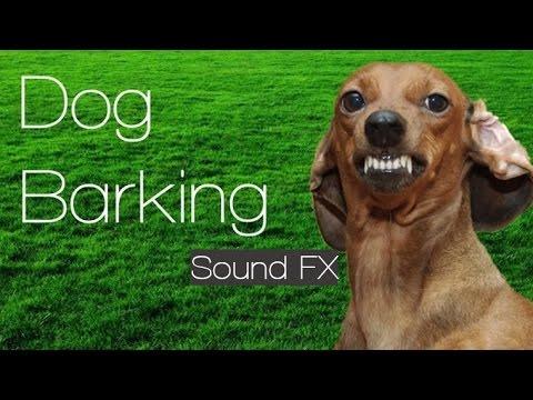 Barking Dog Sound Effects Free