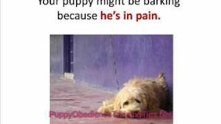 Puppy Obedience Training - How To Quiet Your Barking Dog