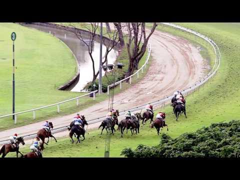 ม้าแข่งสนามฝรั่ง วันอาทิตย์ที่ 20 พ.ย. 59 เที่ยว 6 ม้าชั้น 1