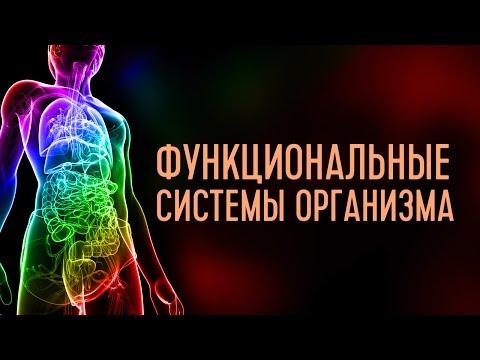 Функциональные системы организма. Лекция 3. Система терморегуляции
