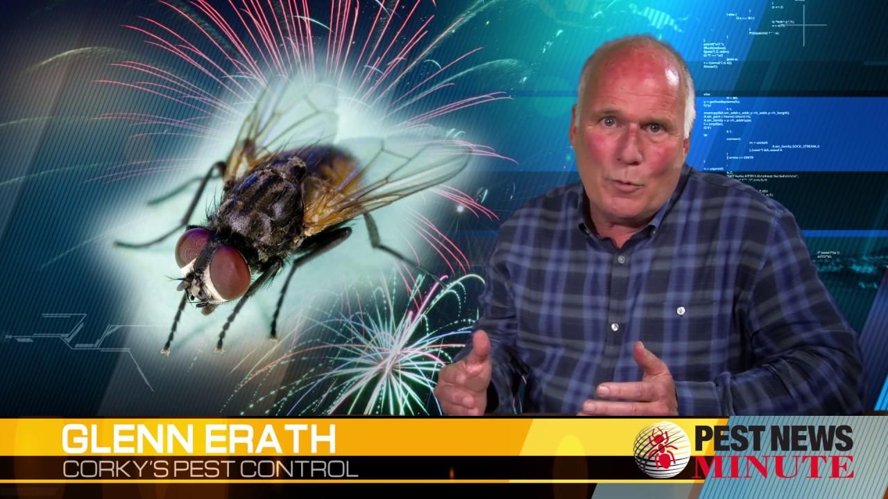 Flies Control Service : Flies Service : San Diego Flies