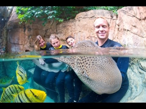 Discovery Cove Shark Swim | SeaWorld Orlando