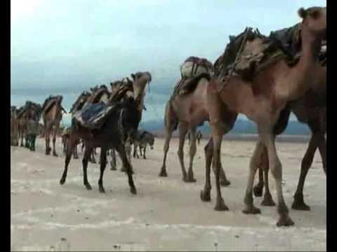 БУМЕР - За перевалом ветер и страх,   идут верблюды на длинных ногах.   Через ночной аул в Атбасар,   Они везут кукнар.   За перевалом ветер и страх,   Идут верблюды на длинных ногах.   Через ночной аул в Атбасар,   Они везут кукнар. скачать песню мп3
