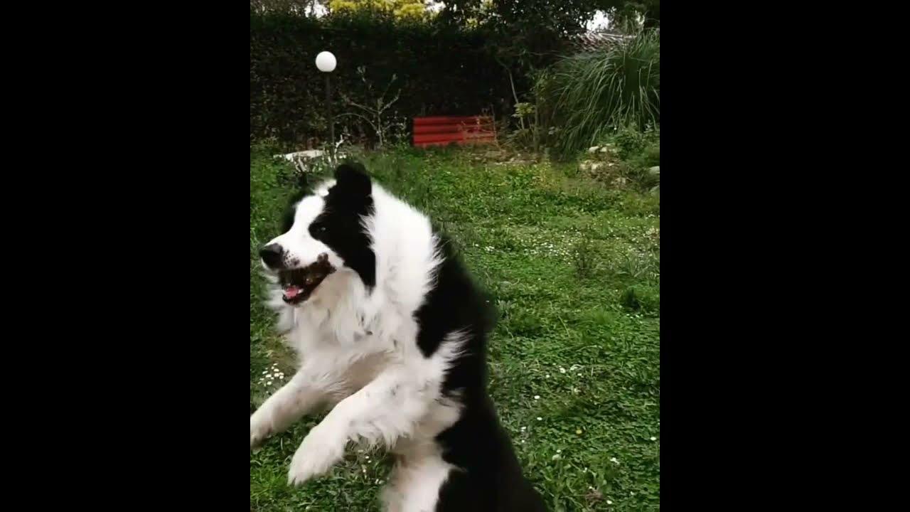 il mio cane mangia normalmente ma perde pesoa
