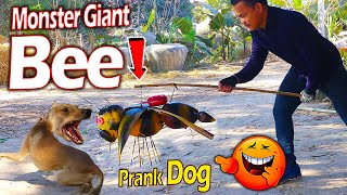 Fake Giant Bee vs Real Dog Prank Very Funny Surprise Scared Reaction  Must Watch Most Funny Prank