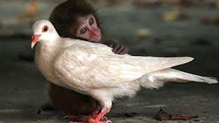 Животные спасают друг друга! Вы должны это увидеть!
